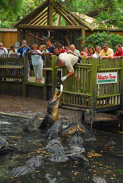 Alligators In Florida Map.St Augustine Alligator Farm Zoological Park Florida Youth